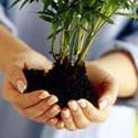 Пересадка комнатных растений