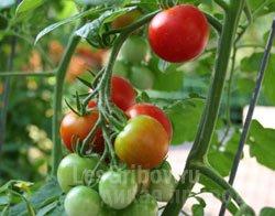 Выращивание овощей и зелени в домашних условиях