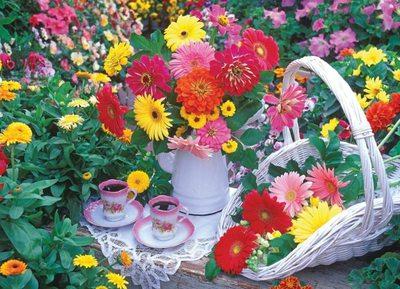 Душистые травы, ароматные цветы и кустарники в саду