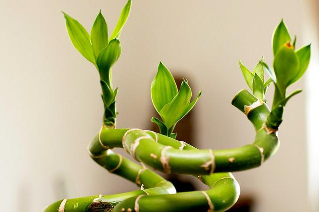 Растения для мест со слабым освещением