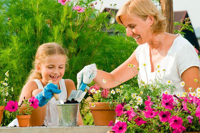Цветы на участке, польза для глаз и здоровья