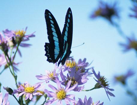 Цветы для бабочек – привлекаем бабочек в сад