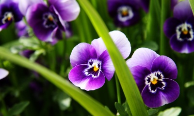 Сад запахов - душистые цветы в саду