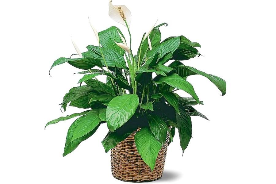 Всё о растениях