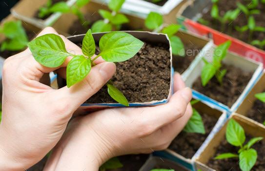 Выращиваем цветы из семян