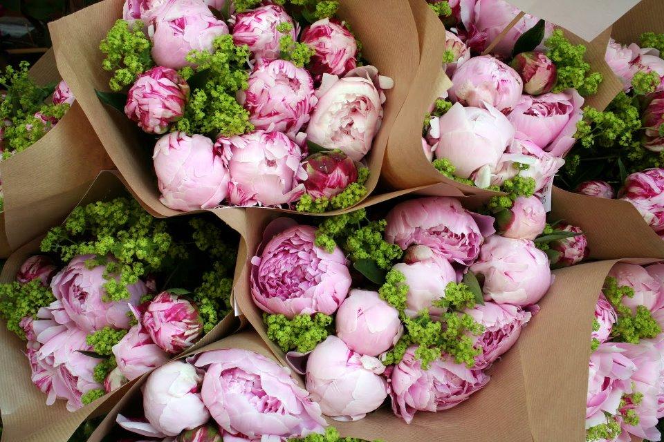 Подкормка пионов для пышного цветения