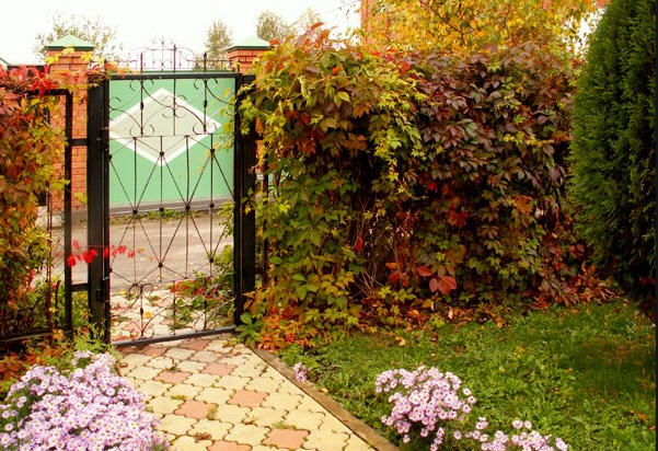 Защита участка от ветра: избавляемся от сквозняков в саду