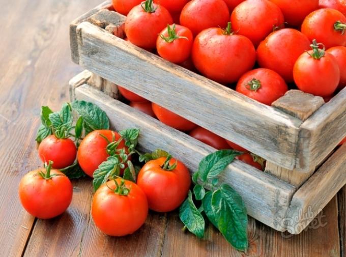 Как правильно собирать и хранить урожай томатов