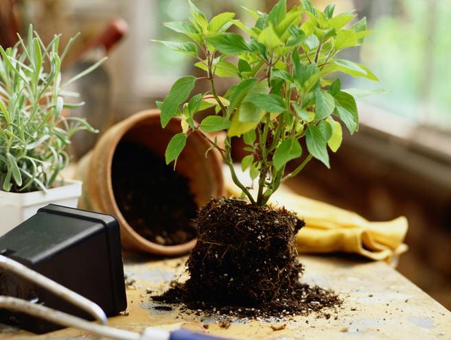 Подготовка комнатных растений к лету