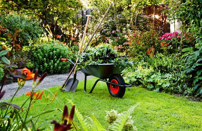 В чем особенность ухода за садом
