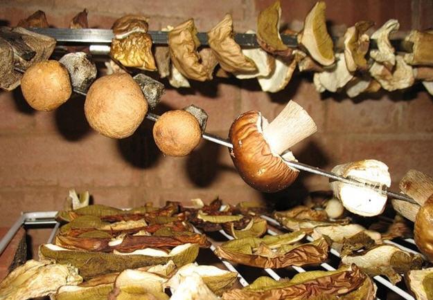 Как сушить грибы на зиму