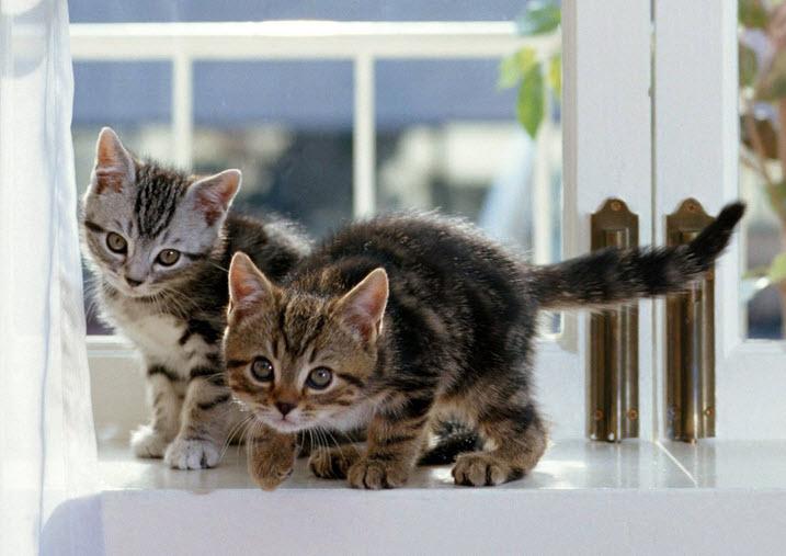 Как создать уют для кошки в доме