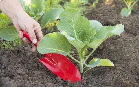 Органическое земледелие 1481777517_grin-kolor