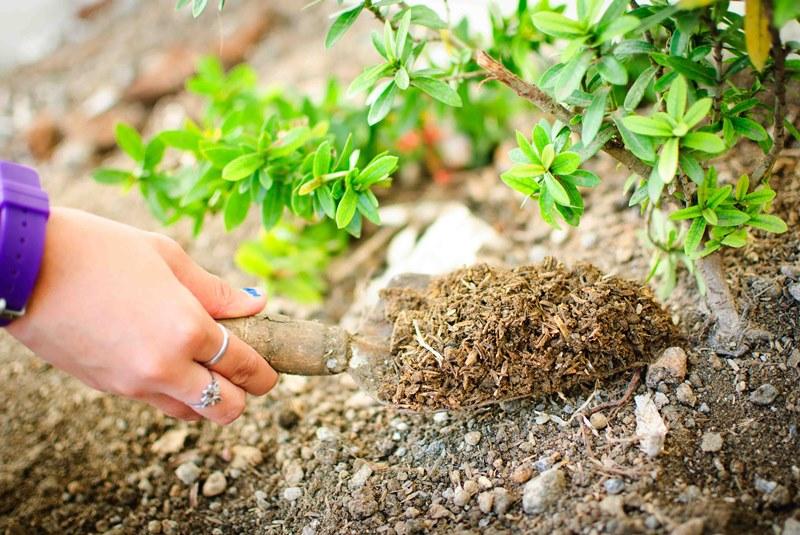 Нюансы выращивания комнатных растений: от повреждения растений удобрениями, до выбора земли
