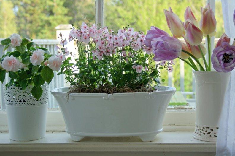Выбор и выращивание растений на солнечном окне. Причины гибели растений в покупной земле
