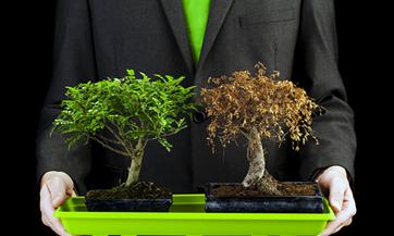 Гибель растений в магазинной земле