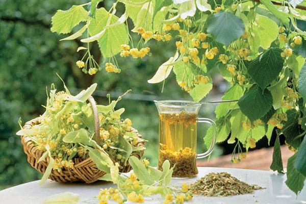 Травы для укрепления иммунитета в сезон простуды и гриппа