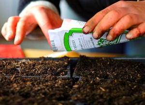 Как выбрать семена для рассады