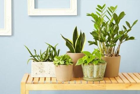 Рейтинг самых неприхотливых растений