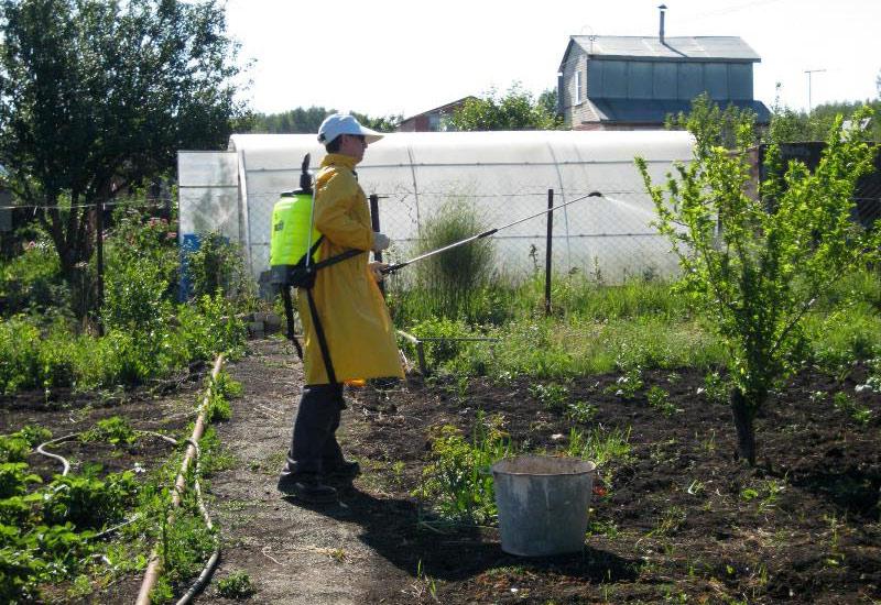 Биологический метод дезинфекции почвы весной от болезней и вредителей