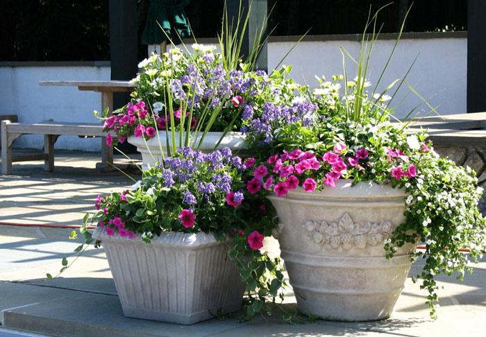 Выращивание цветов в горшках и вазонах