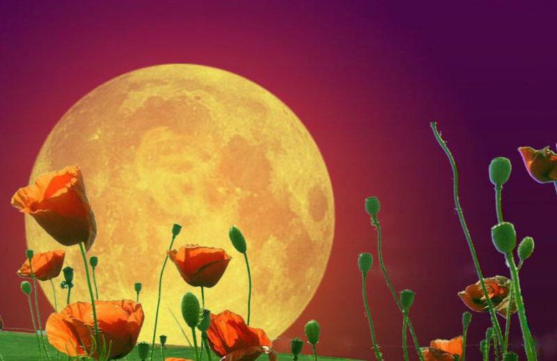 Влияние луны на растения