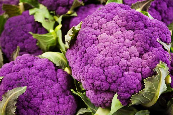 Цветная капуста сорт 'Пурпурная'