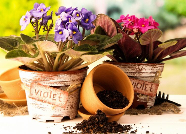 комнатные растения - пересадка