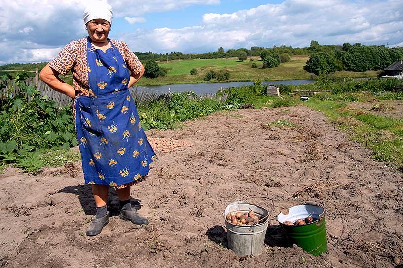 Как появился картофель в России и его агротехника