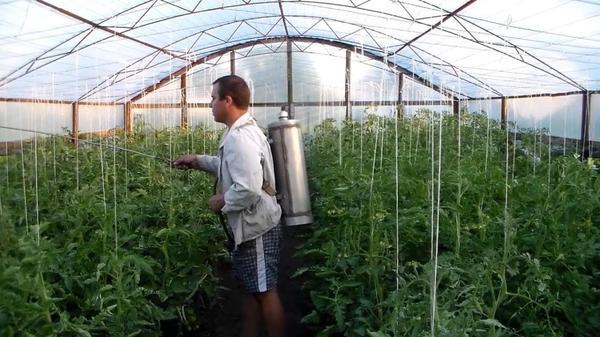 Обработка растений в теплице