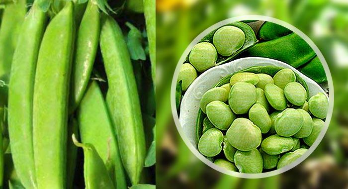 Фасоль лимская, полезные свойства и состав