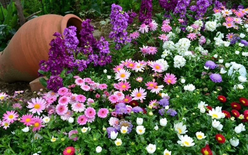 Садовые цветы которые цветут непрерывно