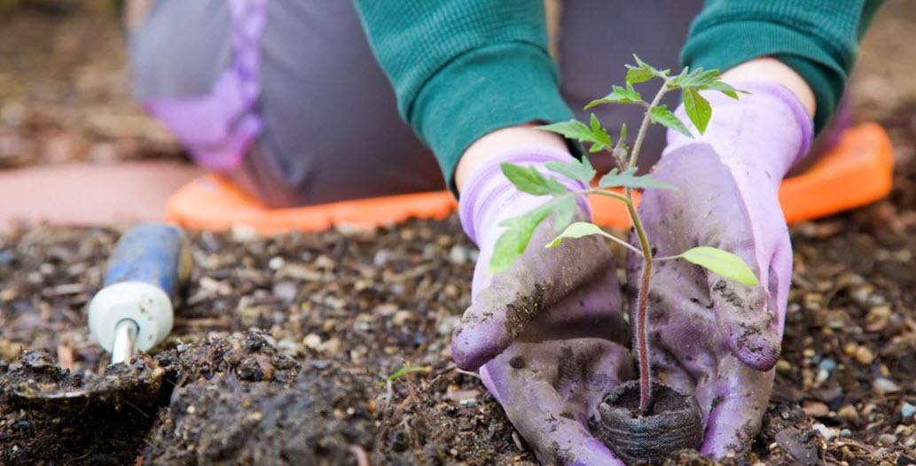 Весенние работы на участке с огородом и садом