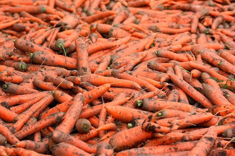Что бы получить богатый урожай моркови