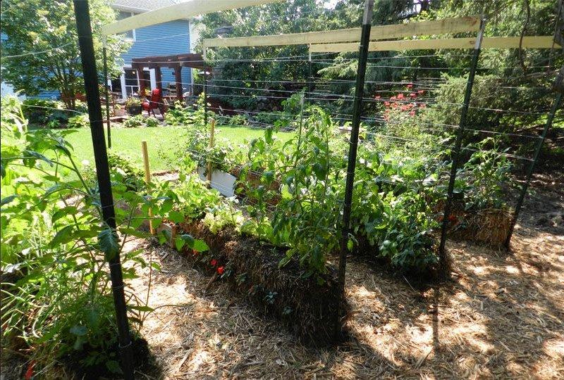 Выращивание овощей на соломе