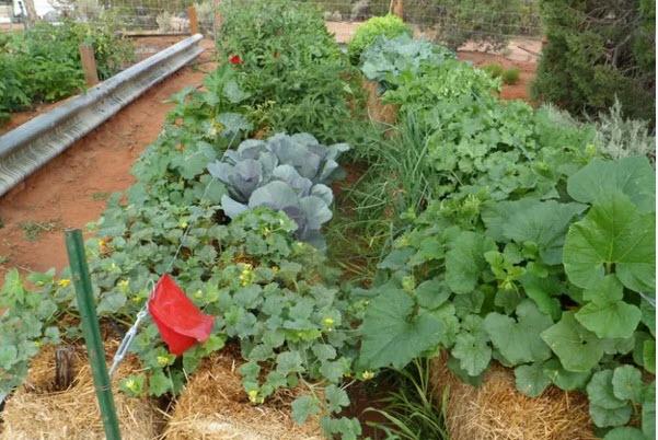 как вырастить овощи в соломе