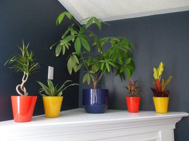 Растения которые будут расти даже в тени