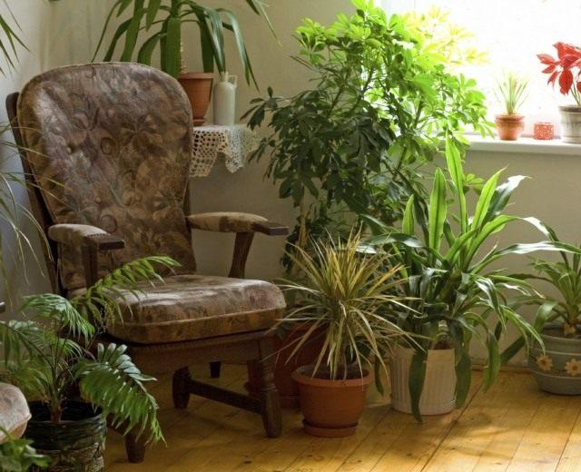 растения в темном углу комнаты