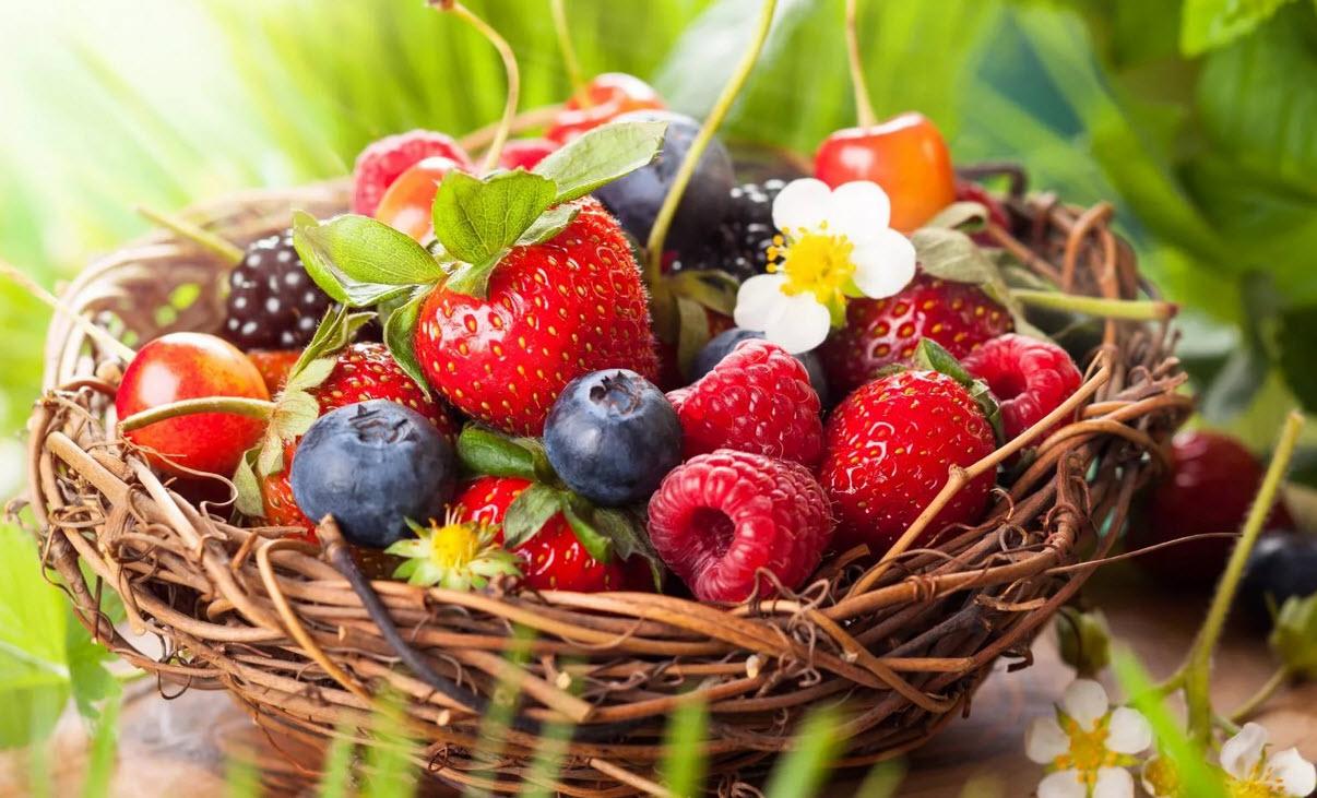 Какие ягоды растут в лесу, съедобные и несъедобные