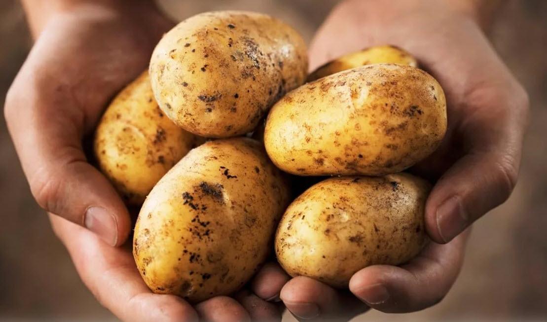 Все что нужно знать о картофеле