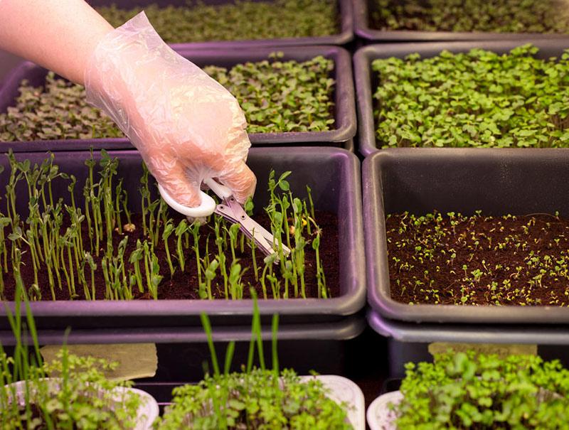 Различные приспособления для выращивания рассады
