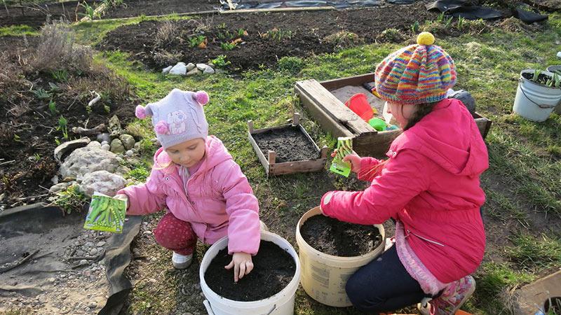 выращивание овощей в ведрах