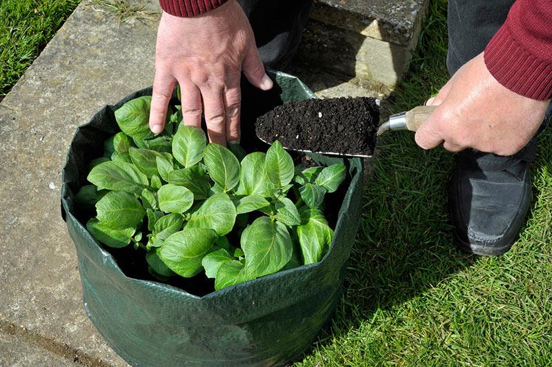 выращивание картофеля в мешке