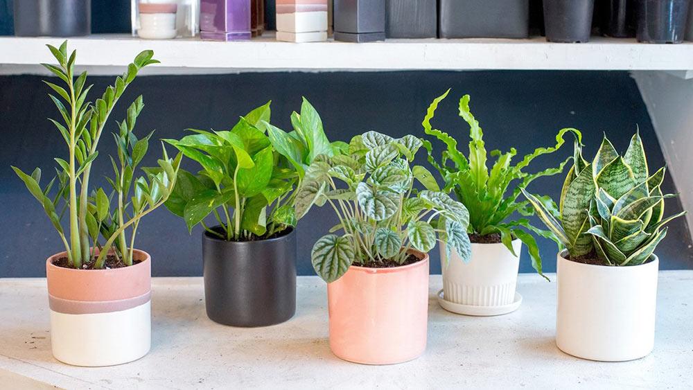 Выбор комнатных растений
