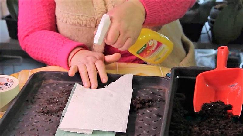 Раскладываем семена и смачиваем