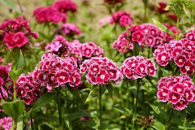 Посадка диких цветов в домашних условиях