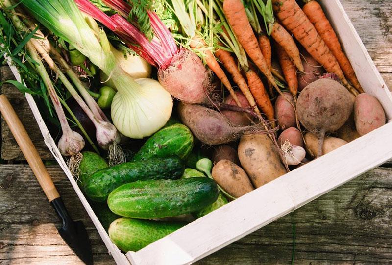Как правильно хранить овощи зимой
