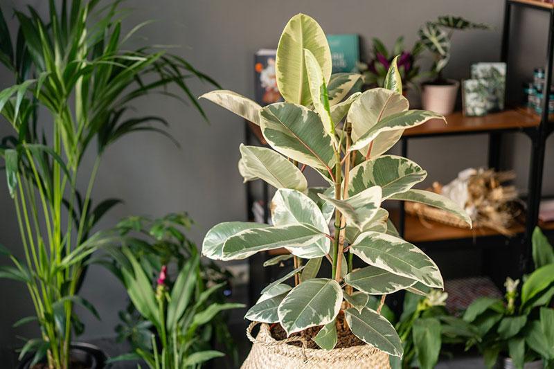 На что обратить внимание при покупке дорогих комнатных растений