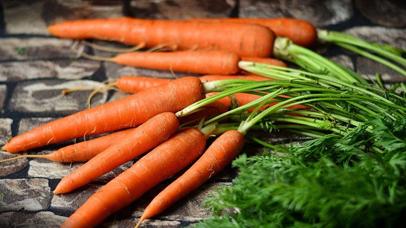 Лучшие сорта моркови на 2021 год
