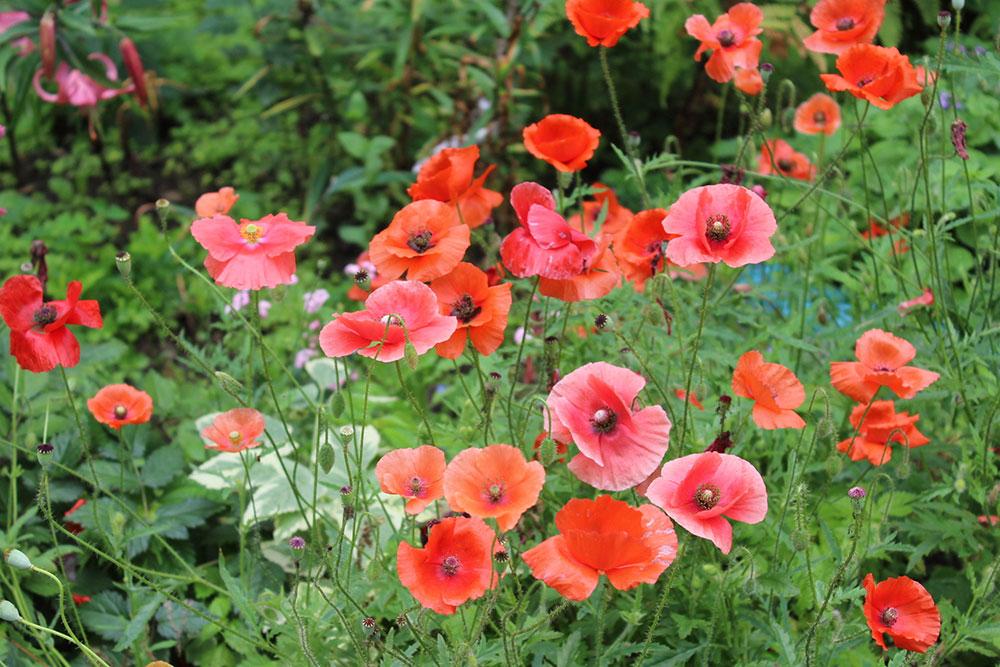 Самые красивые многолетние цветы